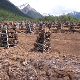 Peat blocks stacked to dry