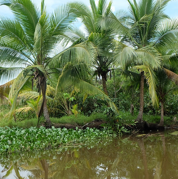 Tropical forested wetland